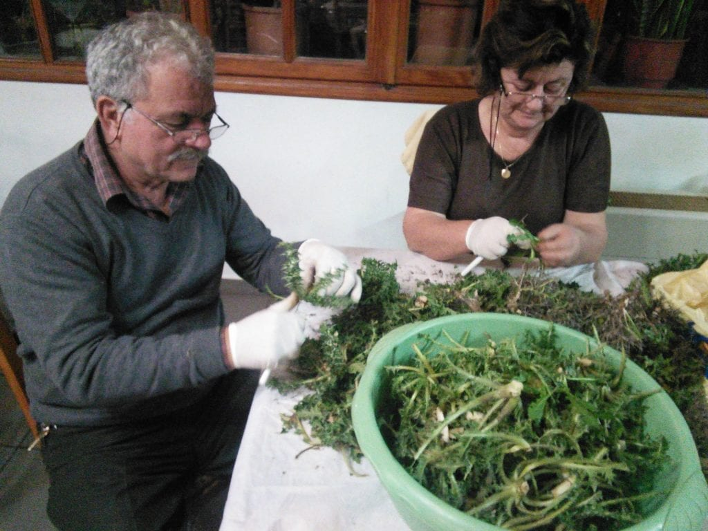 Mr and Mrs Lentari preparing stamnagathi at To Panorama