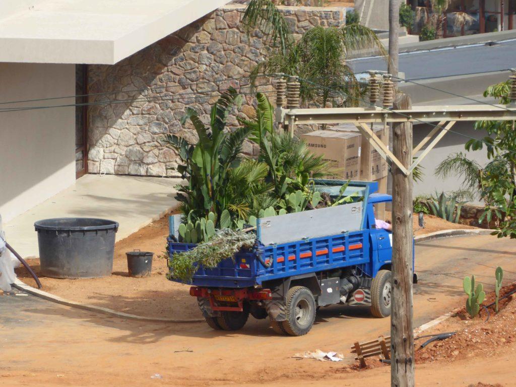 Plants arriving at Casa Cook