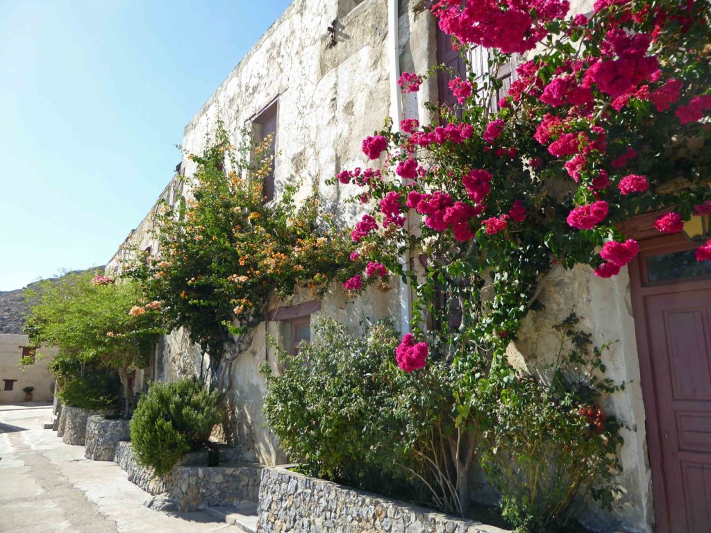 Buildings in the monastery, with bougainvillea