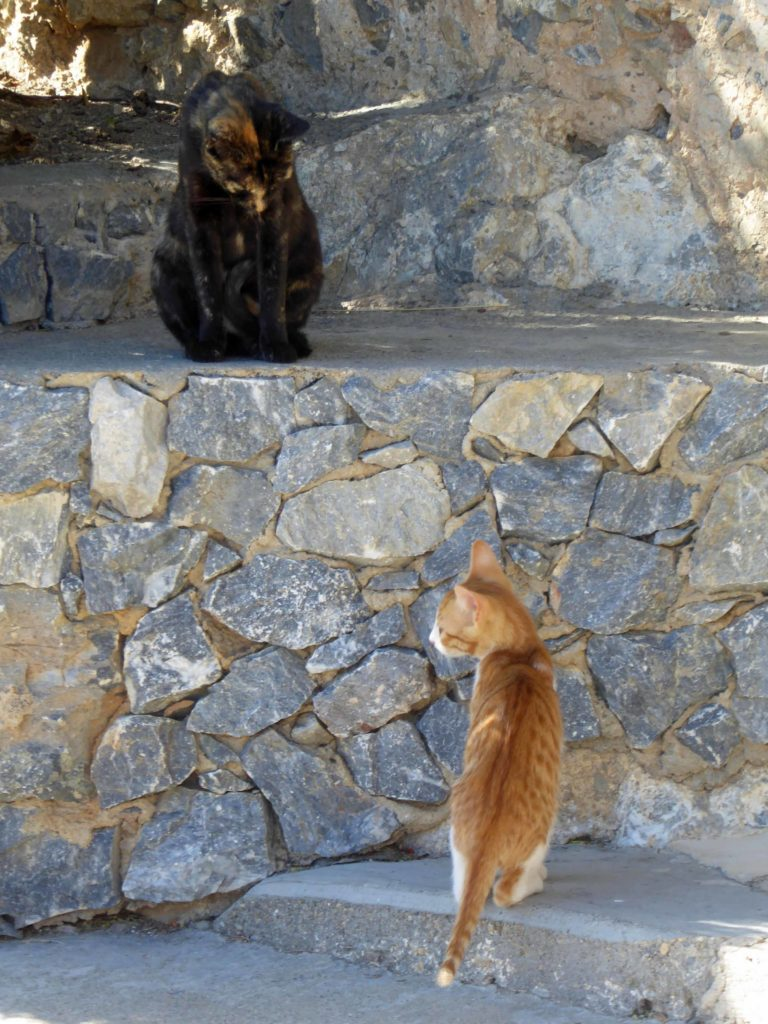 Cats on patrol at the monastery