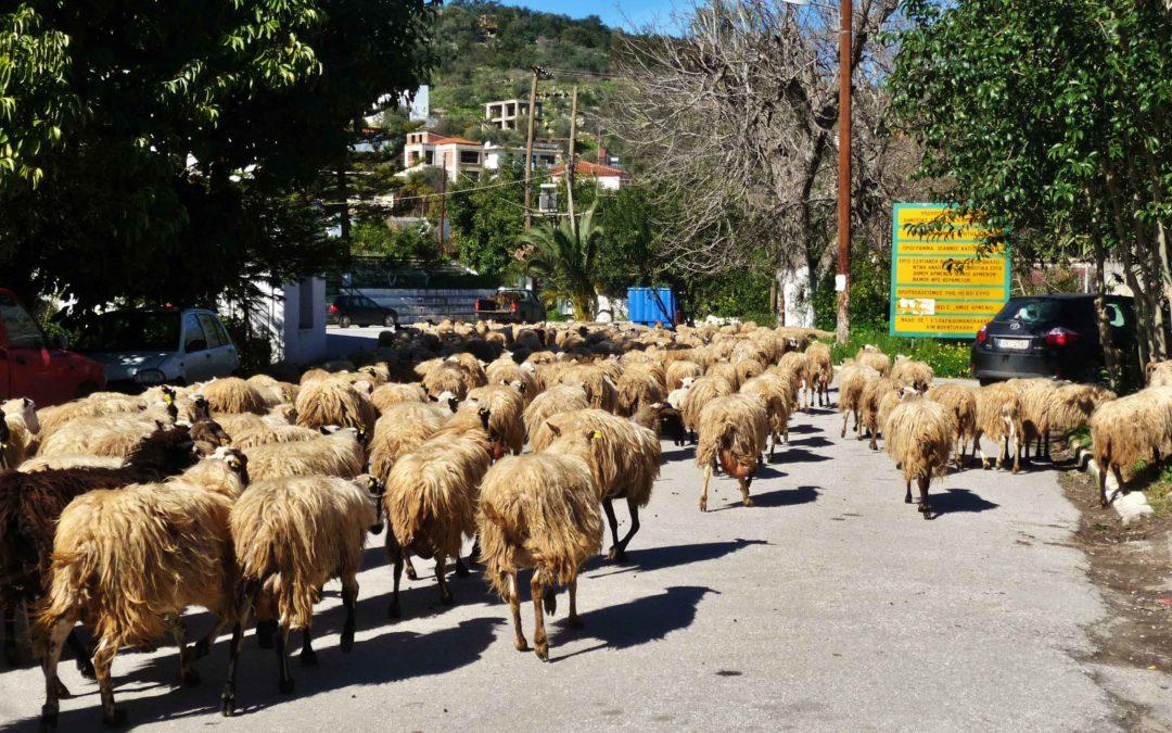Discover Stylos – a Cretan Village